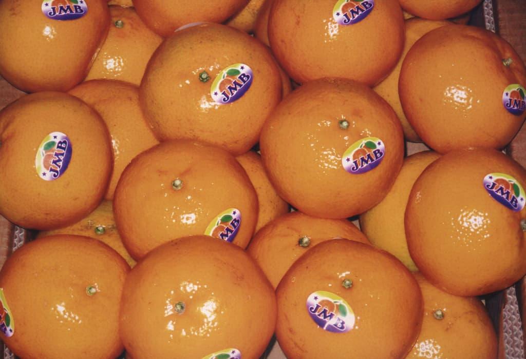 Citrus Exporters Pakistan | JMB Exporters