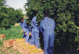 Harvesting Season