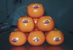 Citrus | Orange | Kinnow | Madarian | Fruiter | Malta | Sangtra